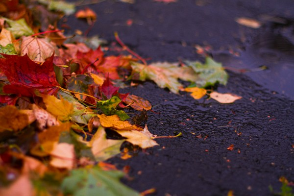 October Ground by Shandi-lee Cox
