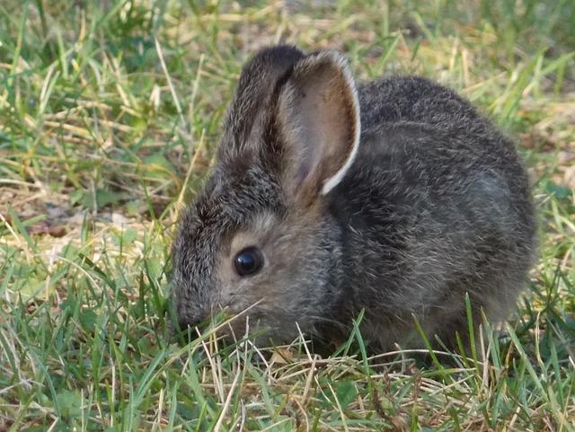 rabbit-460056_640
